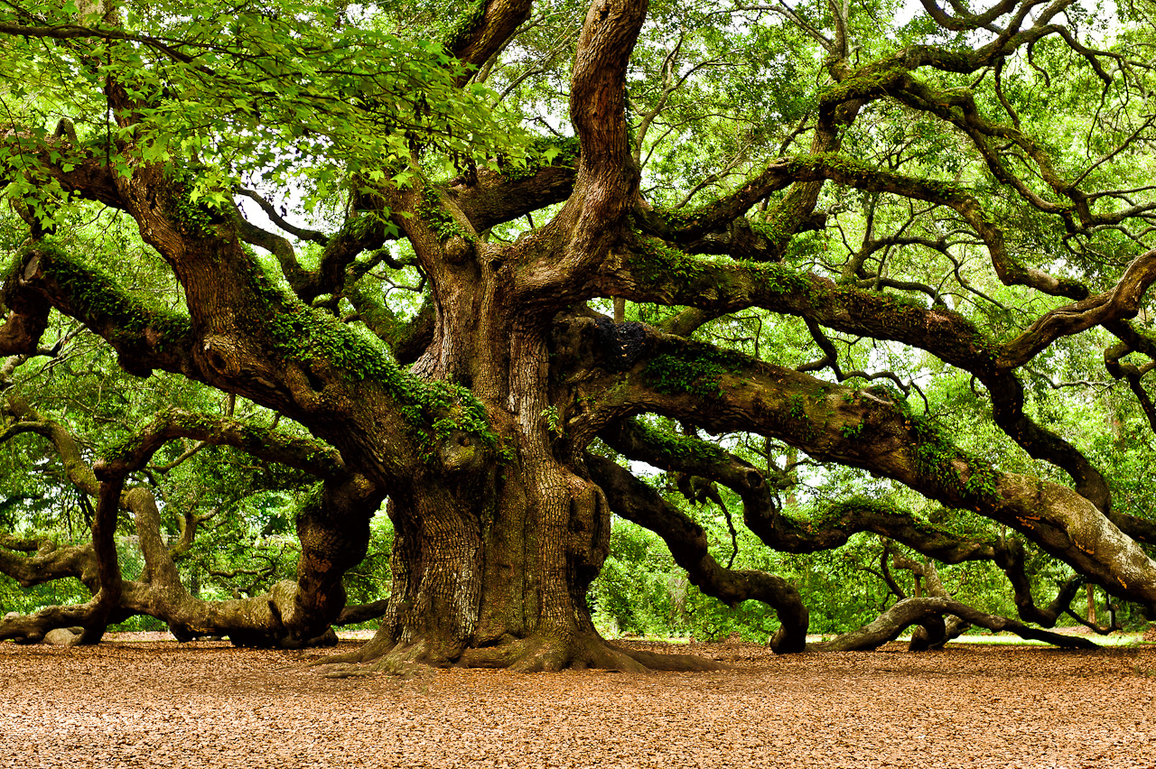 What type of tree best describes your real personality playbuzz biocorpaavc Image collections